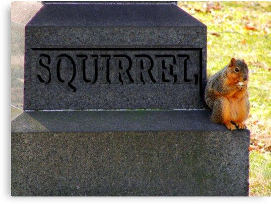RIP Squirrel  by Marcia Rubin