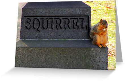 RIP Squirrel  by Marcia Rubin