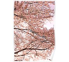 Pink on a Spring Evening Poster