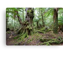 Eucalypt Community Canvas Print