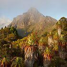 Mt Anne and Pandanus by Mike Calder