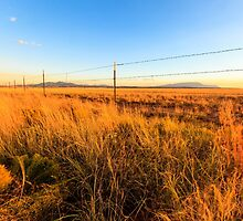 Barbed Wire Fence by bengraham