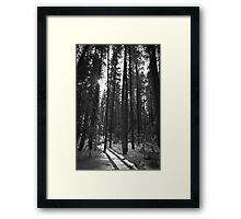 Trees and Shadows Framed Print