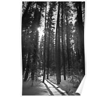 Trees and Shadows Poster