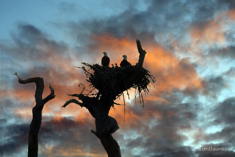 EAGLE FAMILY SUNSET by TomBaumker