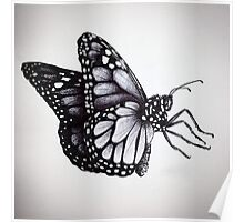 Butterfly Sketch Poster