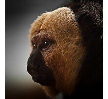 White faced monkey Photographic Print