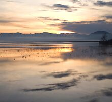 Cerknica lake at dawn, Notranjska, Slovenia by Ian Middleton