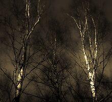Birches by Rob Smith