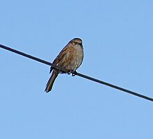 Bird On A Wire by AmandaJanePhoto