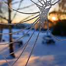 Crystal Web by Antony Ward