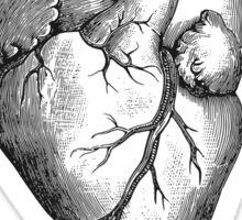 Heart Health Survivor Sticker