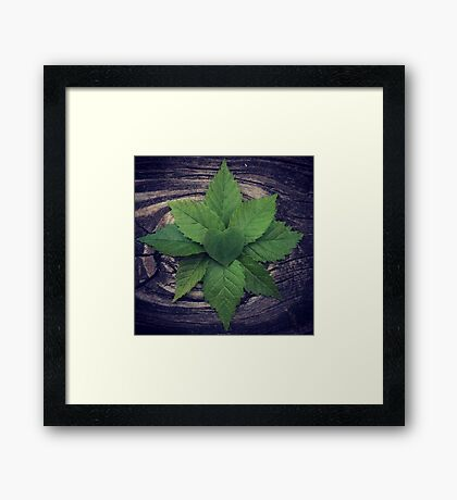 Forest Magick  Framed Print