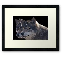 Canis Lupus , two in a Row Framed Print