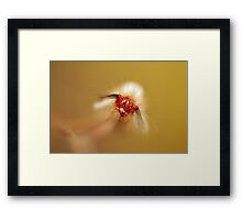 Hairy Caterpillar Framed Print