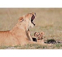Lioness & Cub Amboseli National Park, Kenya Photographic Print