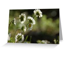 Daises Greeting Card