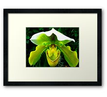 Orchid Collection - 11 Framed Print