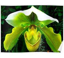 Orchid Collection - 11 Poster