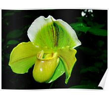 Orchid Collection - 15 Poster