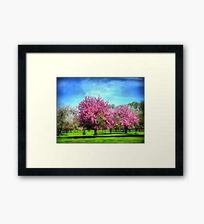 A Park In Bloom Framed Print
