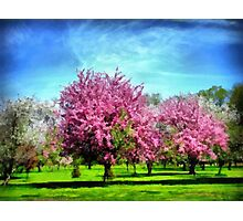 A Park In Bloom Photographic Print