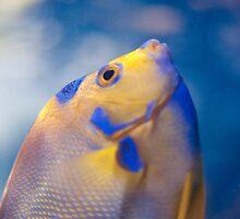 Glass Fish by Devon E. Sioui