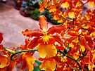 Orchid Collection - 17 by Marcia Rubin