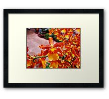 Orchid Collection - 17 Framed Print