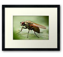 Fly on a leaf 3 Framed Print