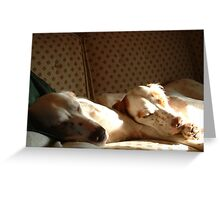 Brutus and Molly in Iowa, 2006 Greeting Card