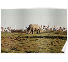 Rhino by Lake Nakuru Poster