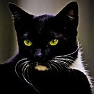 Mr Macdonald part II: On Featured: Cats-and-dogs Group by Kornrawiee