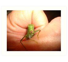 Safe in my hand...a katydid Art Print