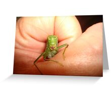 Safe in my hand...a katydid Greeting Card