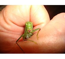 Safe in my hand...a katydid Photographic Print