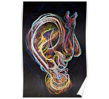 Auricle Poster
