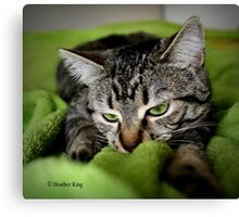 Fascination with Greenie Canvas Print