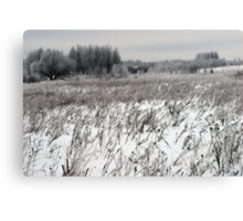 Grassland in winter time 2 Canvas Print