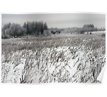 Grassland in winter time 2 Poster