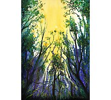 Forest Light Photographic Print