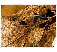 Tatty Leaf Poster