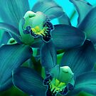 Dreams in Blue by Susanne Van Hulst