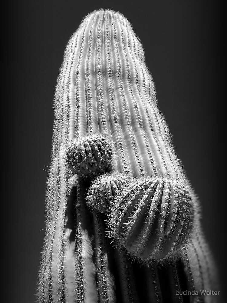 The Mighty Saguaro Cactus - Symbol of the Desert Southwest by Lucinda Walter
