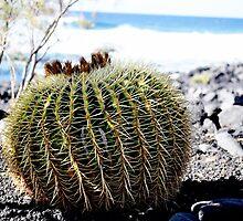 Do not sit over this...Echinocactus grusonii (cussin de la belle mère) by Alessandra Antonini