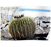 Do not sit over this...Echinocactus grusonii (cussin de la belle mère) Poster