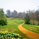 A Host of Golden Daffodils by DonDavisUK