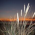 Grasses at Hunstanton by Sue Payne