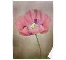 Pastel poppy Poster