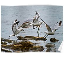 Seagulls Taking Off Poster